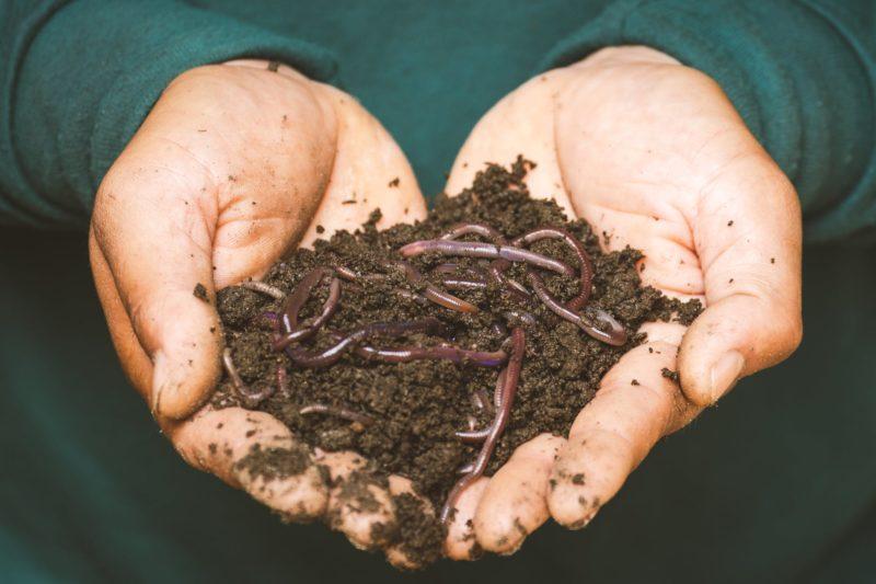 Eckards Wurmstube - Regenwürmer in Händen